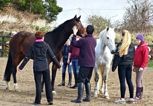 horse-play-life-skills-through-horse-skills-horses-connect-equine-assisted-services-galway