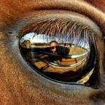 horses-connect-equine-assisted-therapy and learning