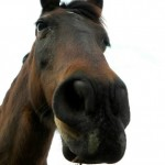 horses-connect-equine-assisted therapy