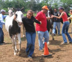 horse-sense-for-business-people-horses-connect-equine-assisted-programs