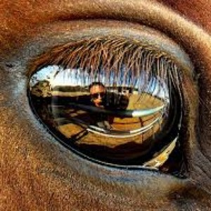 Horses-connect-equine-assisted-personal-development-Galway