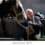 horses-connect-equine-assisted-therapy