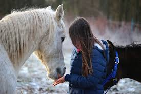 Horse-Power-Equine-assisted-Wellness-Retreats-Galway