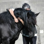 equine-assisted wellness-andpersonal-development-retreats, galway, retreat, wellnes, horres-connect