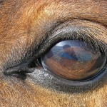 equine-assisted learning programs,-Galway