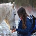 equine-assisted, horses connect, Galway, Ireland, EAGALA
