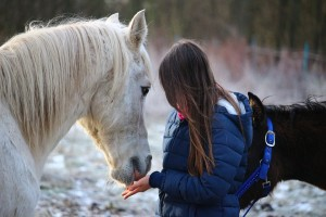 equine-assisted learning programs, galway, horses connect, Galway, Ireland, EAGALA