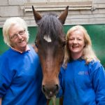 horses-connect,equine-assisted-learning, galway, horses-helping-people, corporate