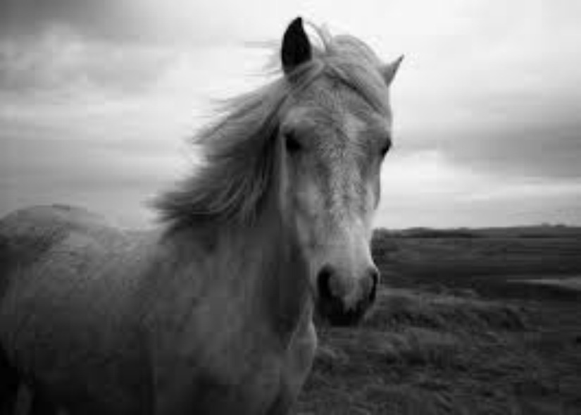 horses-personal-development-professional-horses-connect-galway-corporate-training