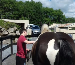 blog, Paddy, equine-assisted-therapy, therapeutic-horse-riding, galway horses-connect