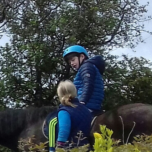 Galway, therapeutic horse-riding, hores-connect