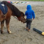 Galway, horses-connect, therepy-with-horses