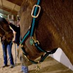 corporate-training-horses-connect-galway