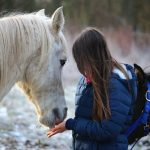 equine-assisted-learning-Galway