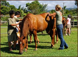 EAGALA horses and therapy